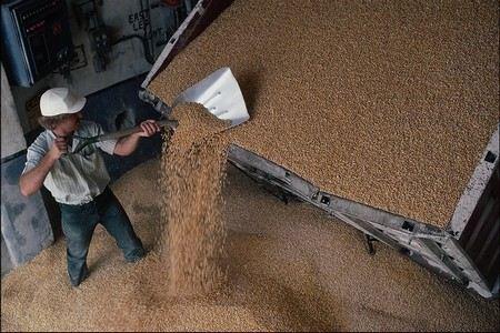 В России собрано три четверти урожая зерна. Намолочено 63 млн тонн.