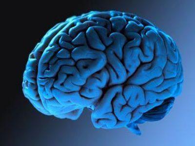 Атлас головного мозга будет призван разгадать загадку человеческого разума
