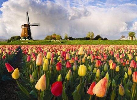В России в 2013 году пройдет год Нидерландов, а в Нидерландах - год России.