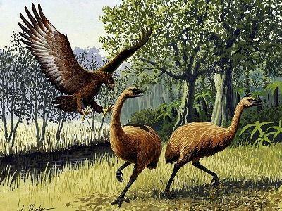 Гигантская Птица Моа, которой уже нет