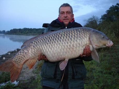 Наши рыбаки – тоже молодцы: сазан весит 30 кг