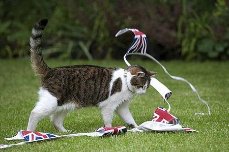 В Великобритании полиция разнимала драку котов, принадлежащих министрам