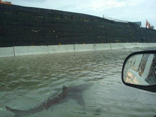 Стихия Сэнди вынесла на городские улицы акул