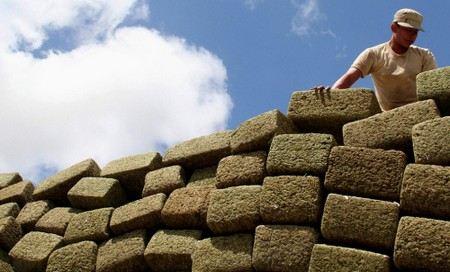 В Мексике депутаты конгресса хотят легализовать марихуану.