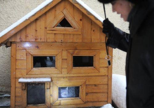 Коттеджи для бездомных кошек появились в Москве