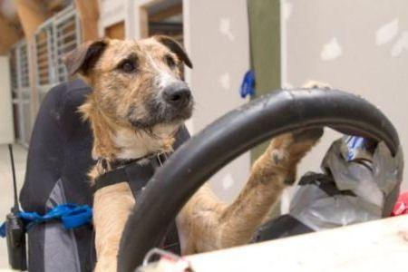 Водитель готов сесть за руль