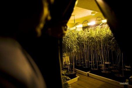 В штате Колорадо в США легализовали марихуану.