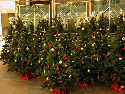 Новогодние елки урасят миллионы домов