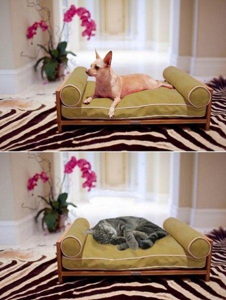 Мебель животных своими руками