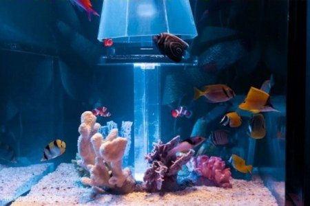 Имитация морского дна