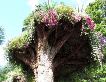 Клумба на дереве