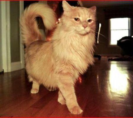 В Интернете запущена кошачья социальная сеть