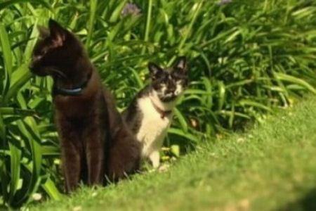 Кошки-убийцы
