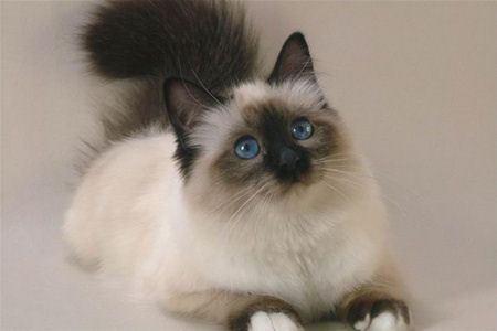 Любители кошек - против кампании Моргана