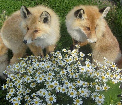 Цель таксидермии - сохранить естественную красоту животных