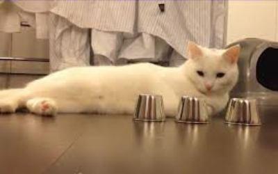 Кот-наперсточник