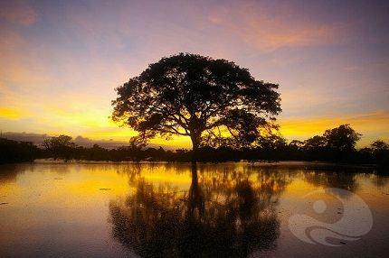 Закат над Амазонкой