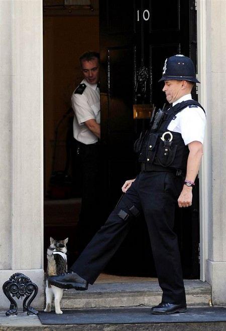Коту британского премьер-министра запретили появляться на территории министерства иностранных дел.