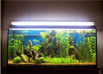 Пять типов аквариумных растений запретили в Великобритании