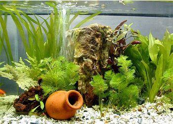 Экологи страны давно выступали против реализации, хранения некоторых растений