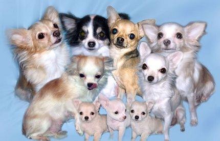 Картинки собаку