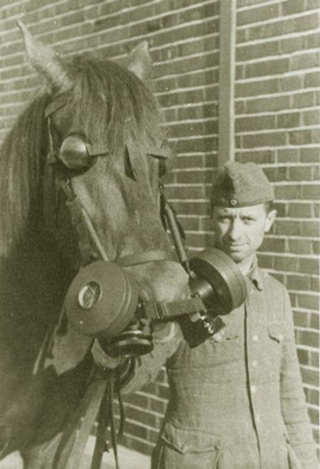 Минобороны хочет ликвидировать запасы противогазов для лошадей КСПФ-1.