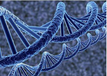 Учёные открыли удивительнейшие огнеупорные свойства ДНК