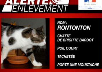 В Сен-Тропе нашли пропавшую кошку Брижит Бардо