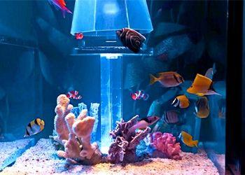 Американские дизайнеры создали уникальную релакс-кровать с аквариумом