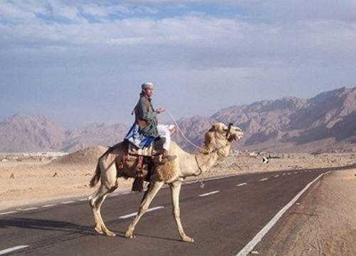 Пока Хургаду и Луксор связывает только автомобильная дорога