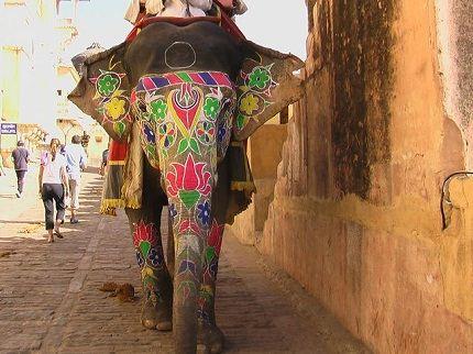 Индийский слон - очень большое и красивое животное
