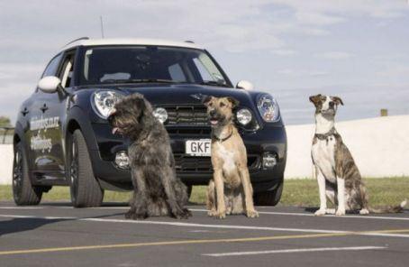 Первые в мире собаки-водители