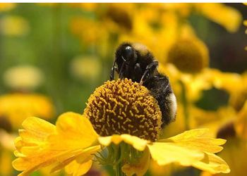 В новосибирских теплицах для опасных насекомых установили цветовые ловушки