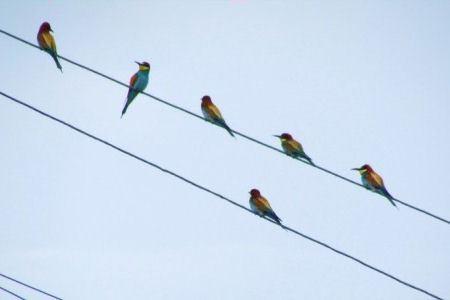 Птицы наносят электрооборудованию ущерб