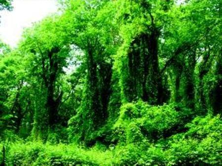 Самурский лиановый лес