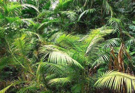Самое большое растение на суше
