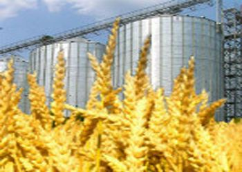 В Орловском районе в 2013 году появится завод по переработке зерна
