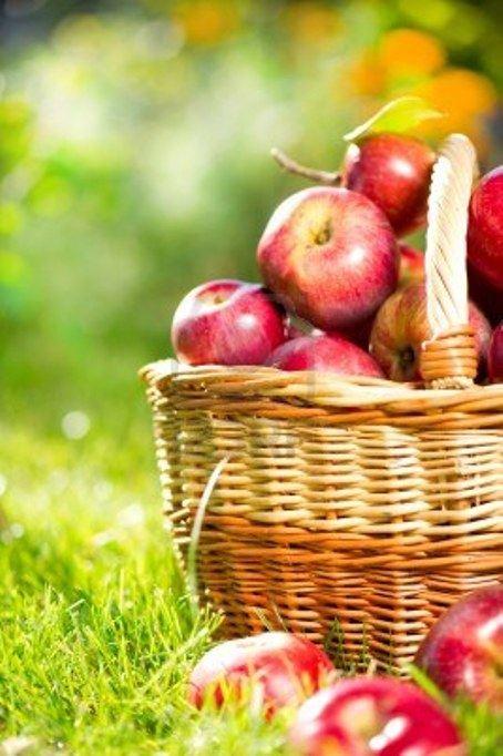 Яблоки краснеют с тех самых пор, когда яблоня услышала, что Ева сказала Адаму