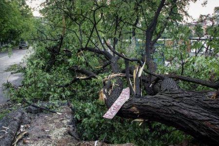 Падающие деревья вызвали аварии ЛЭП