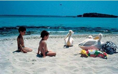 По пляжу Нисси Бич запросто ходят пеликаны