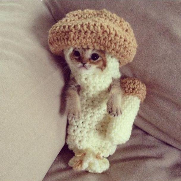 котенок - грибочек