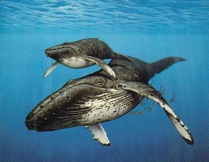 Синий кит с детёнышем