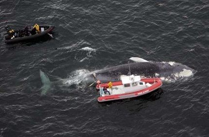 Синий кит. Размер