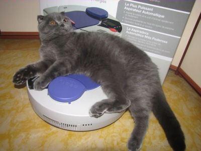 Домашние животные тоже любят роботы-пылесосы