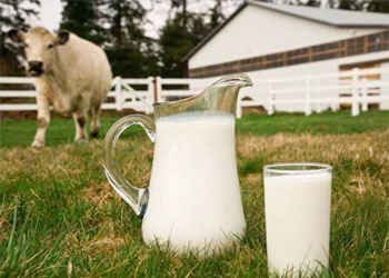 В России цены на молочные продукты осенью 2013 года останутся на прежнем уровне