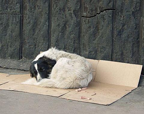Жители Томска помогают бездомным животным