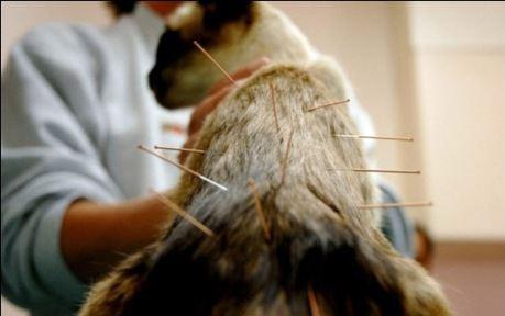 Нетрадиционная медицина для животных