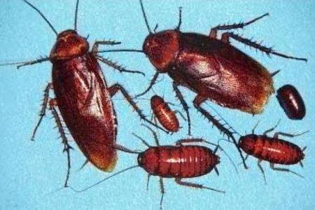 У насекомых высокая адаптация