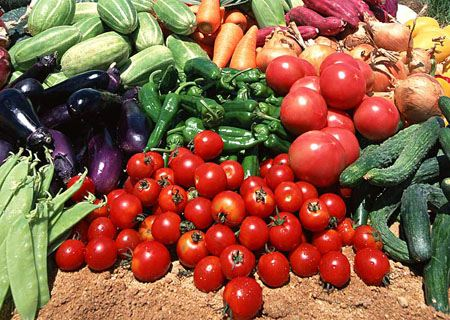 На сбор овощей ставропольские власти потратили внушительные суммы
