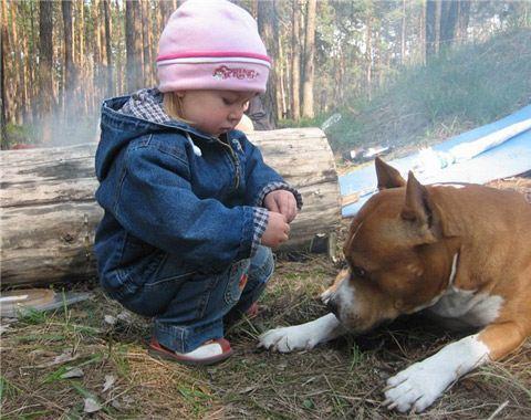 Стаффорд прекрасно ладит с детьми, другими домочадцами и домашними животными